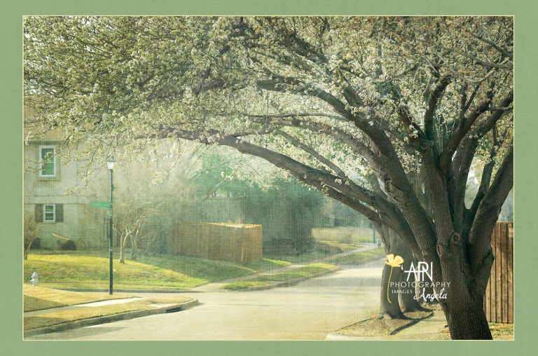 textured neighborhood scene of a pear tree
