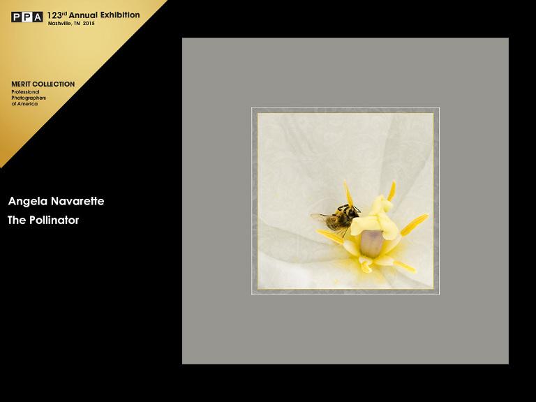 competition-artwork-plano-photographer-bee-pollinating-dallas-arboretum