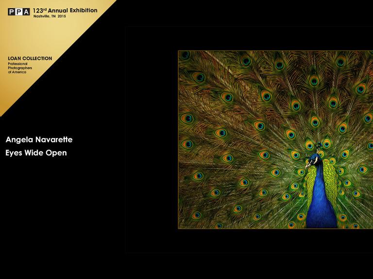competition-artwork-plano-photographer-peackock-eyes-open