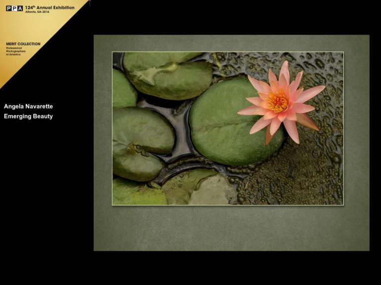 Awards by Plano Photographer; Fine Art Photographer; Angela Navarette Competition Artwork